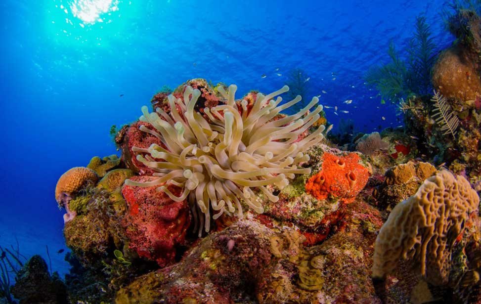 Explore Little Cayman, Cayman Islands With Olympus Dive Center