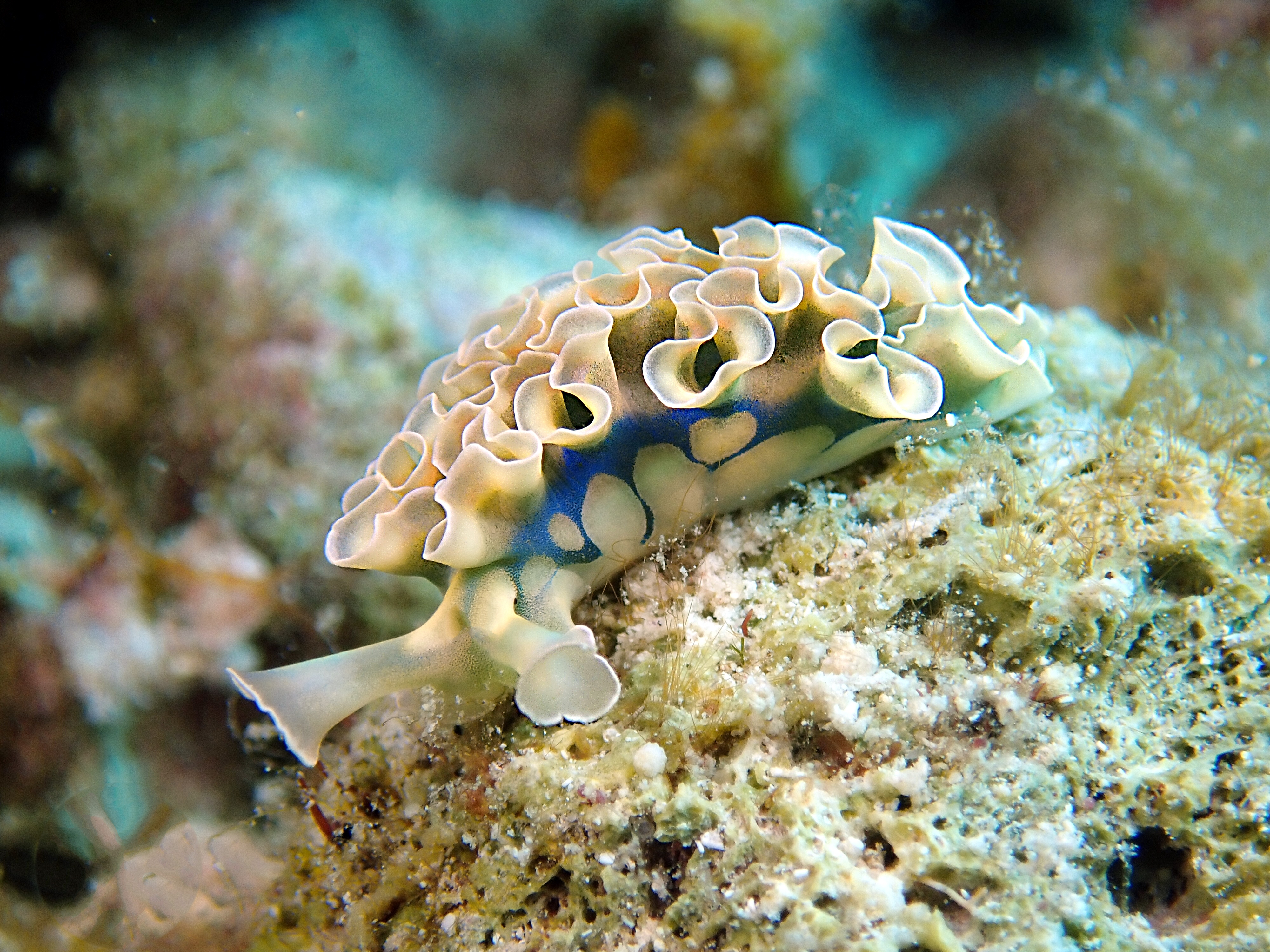 Little Cayman Slug