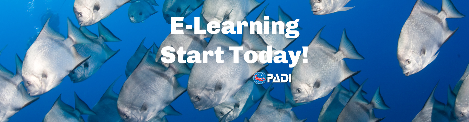 E-Learn Start Today